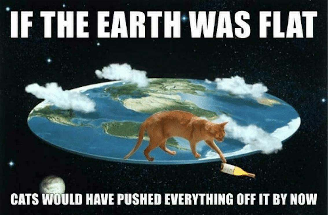 flat earth meme funny cat cats flat earther